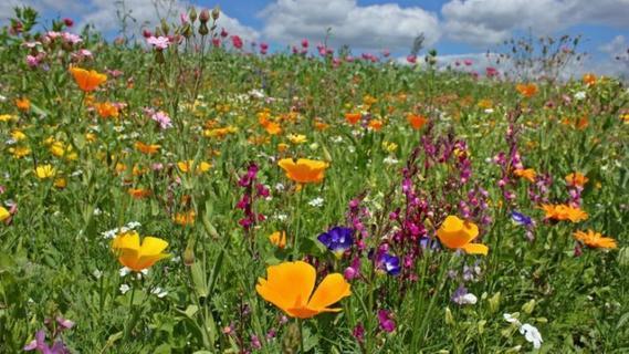 Aktiver Artenschutz: Schar der Blumenpaten wächst