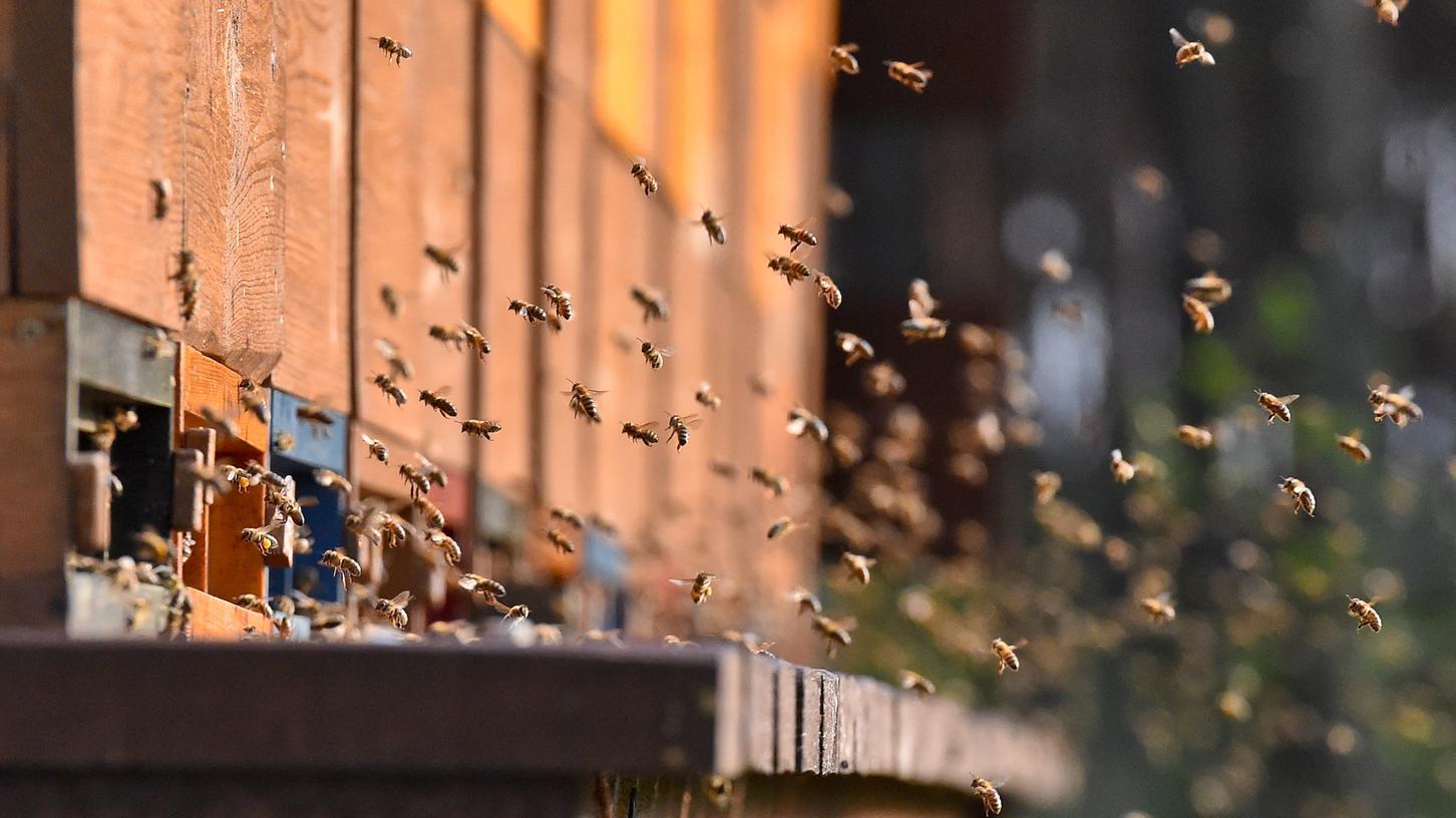 Jedes sechste Bienenvolk in Bayern hat den Winter nicht überlebt. Schuld daran ist eine Milbe.