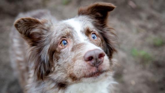 Halterin verliert Kontrolle über Hund: Drei Tiere tot