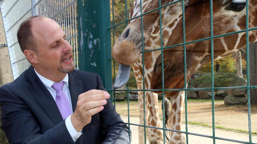 Auf 63 Hektar breitet sich der Tiergarten am Schmausenbuck aus. Zu den Attraktionen gehört neben dem Delphinarium das Giraffengehege (im Bild mit Bürgermeister Christian Vogel). In den Tiergarten strömen jedes Jahr rund 1,14 Millionen Besucher.