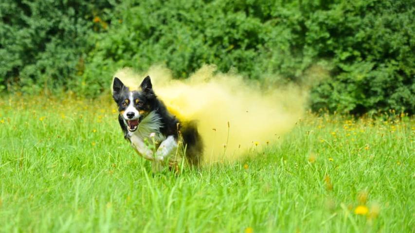 Anmutig bis verrückt: Hier fliegen die Hunde unserer User durch die Luft