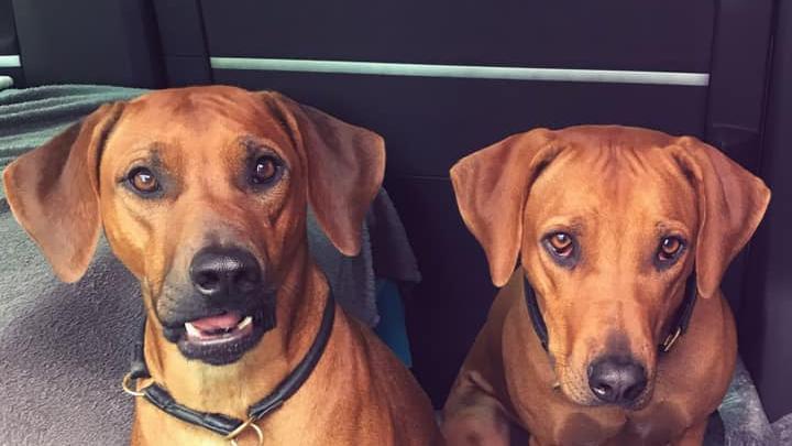 Enna und Nyah sind in Gosberg zuhause.