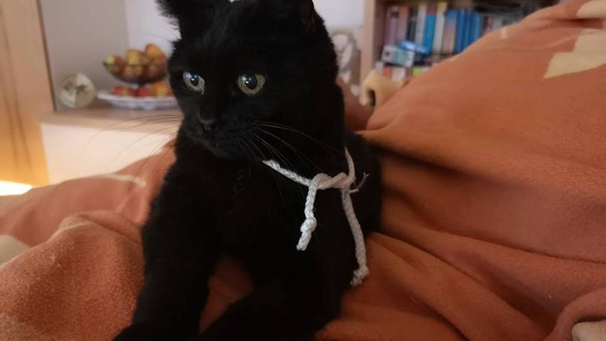 Katze Hexi (19) von Karlheinz Weigand