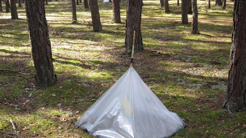 Entdeckt man dieses seltsame Zelt im Wald, kann das auf die Kieferneule, auch Forleule genannt, hindeuten. Der Nachtfalter gilt als Forstschädling. Die Kieferneule kann sich rasant schnell vermehren. Mit dieser Insektenfalle wird versucht, die Kieferneule zu fangen.