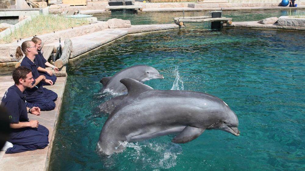 Ein Millionen-Projekt, wegen dem die Stadt Nürnberg nun sogar vor Gericht geht: Die Delfinlagune im Tiergarten Nürnberg.
