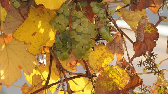 Von Bocksbeutel bis Silvaner: Das sollten Sie über den Frankenwein wissen