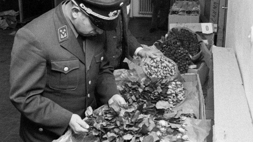Hier sind duftende blaßlila Rosen 'Mainzer Faßnacht