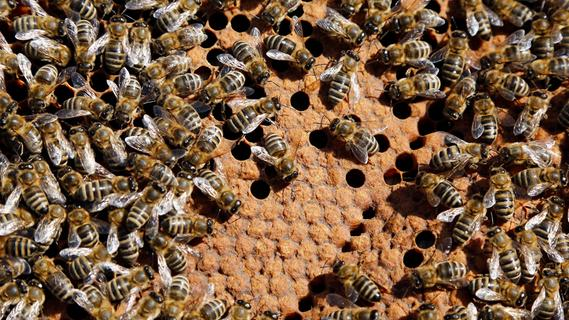 Unbekannter vergiftet sieben Bienenvölker im Raum Ansbach