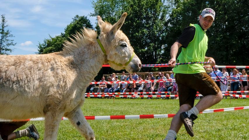 Das Eselrennen beim Frühjahrsfest war eine Riesen-Gaudi