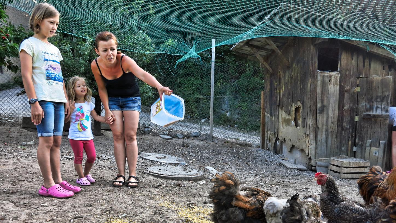 Bäuerin Petra füttert mit den Kindern der Gäste morgens die Hühner und holt dann gleich die Eier. Wer authentisches Bauernhofleben in Südtirol erfahren möchte, kann einen der Höfe des Roten Hahns besuchen. Die Höfe unter der Dachmarke müssen eine lebendige Landwirtschaft mit eigenen Produkten in überschaubarer Größe bieten. Da können Städterer und Familien mit Kindern richtig ausspannen und trotzdem viel erleben.