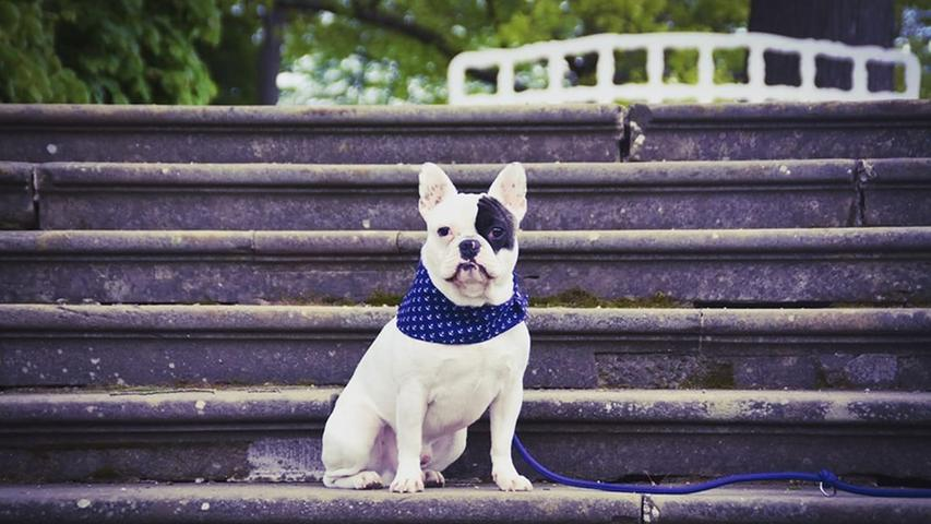Leseraktion Haustier-Fotos. Jimmy von Belinda Eberlein