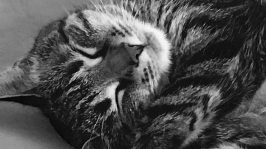 Leseraktion Haustier-Fotos