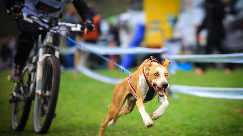 Neben Canicross - bei dem der Läufer einen Bauchgurt trägt, an dem eine dehnbare Leine befestigt ist, die mit dem speziellen Zuggeschirr des Hundes verbunden ist - gibt es Dogscooter und Bikejöring. Beim Bikejöring zieht der Hund den Musher auf seinem Fahrrad. Verbunden sind die beiden mit einer Flexileine und einer Bikeantenne, die verhindern soll, dass sich die Leine im Vorderrad verheddert.
