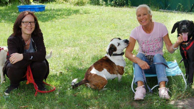 Die Tierhilfe Franken in Betzenstein kümmert sich vor allem um Hunde: 60 Pflegefamilien nehmen die Tiere auf, bis sie weitervermittelt sind. Hier Jennifer Legg und Carmen Baur mit den Hunden Sall, Lunda und Margot (v. li.).