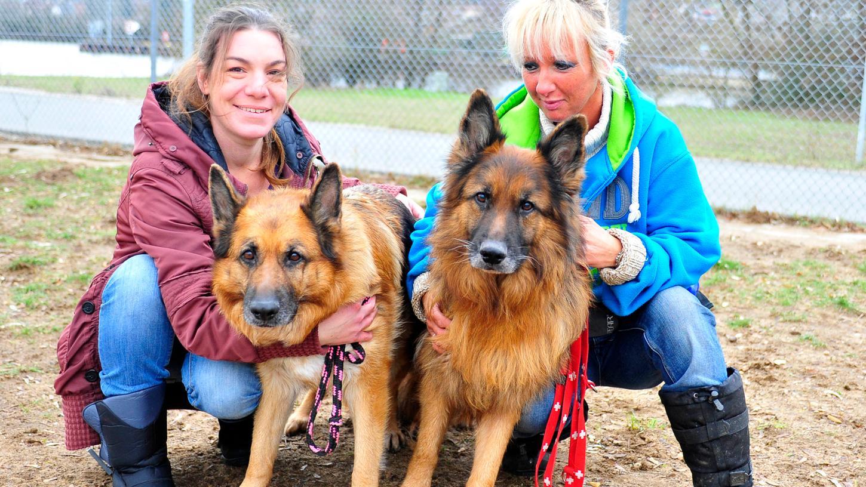 Sechs Halbtagskräfte und viele Ehrenamtliche kümmern sich um schutzbedürftige Tiere im Tierheim Forchheim.