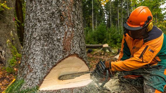 Sör rückt an: In Nürnberg werden abermals viele Bäume gefällt