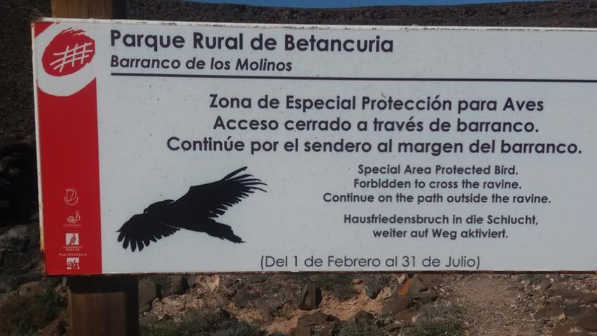 Gesehen beim Wandern auf der spanischen Insel Fuerteventura.