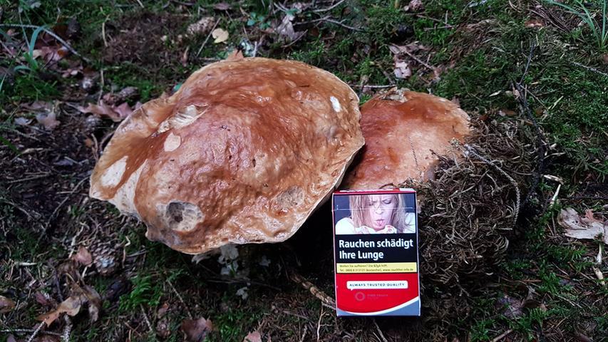 Den größten Steinpilz hat Mario Weidlich im Wald entdeckt.