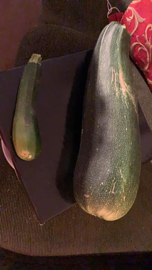 Nicht nur groß, sondern auch gewaltig dick ist die Zucchini von Ekrem Tutkac.