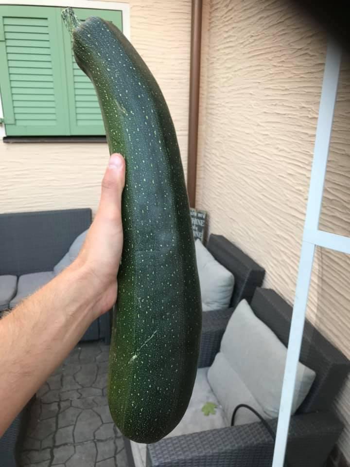 Auch unser User Domi präsentiert ein ganz besonders großes Zucchini-Exemplar.