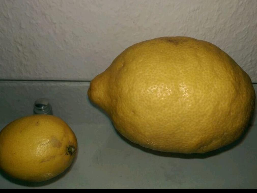 Eine Zitrone der besonderen Art durfte Kaan Kaptan ernten.