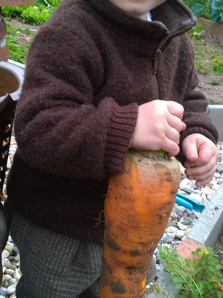 Tief in die Erde hat sich diese fette Karotte gebohrt, bevor einer unserer WhatsApp-User sie geerntet hat.
