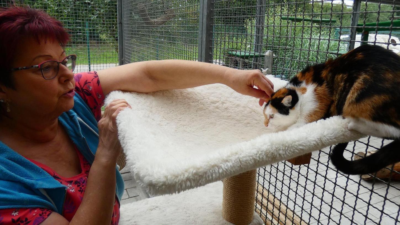 Ein Herz für Tiere: Edith Neumann vom Tierschutzverein Gunzenhausen kann sich auch in diesem Jahr kaum vor Katzen retten.