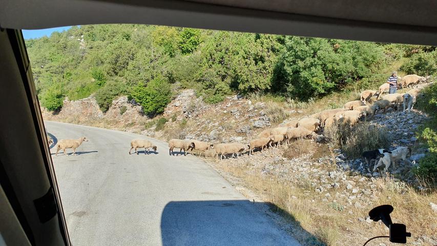 Wer über griechische Landstraßen fährt und nicht von einer Schafsherde aufgehalten wird, hat etwas falsch gemacht.