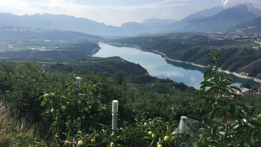 Das Nonstal wird vom Apfelanbau dominiert. Auch der Santa-Giustina-Stausee  ist von vielen kleinen Apfelbäumchen eingerahmt.