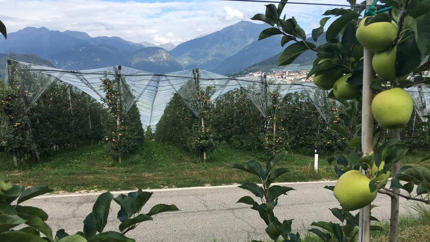 20 Prozent aller Äpfel, die in Italien produziert werden, kommen aus den Nonstal. Rund 4000 Bauern haben sich zur Cooperative Melinda zusammengeschlossen.
