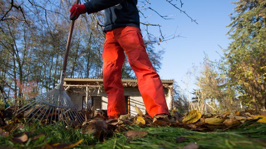 Viele Gartenbesitzer machen sich jetzt ans Aufräumen. Fast jeder möchte sein grünes Paradies winterfest machen und Bäume und Pflanzen zurückschneiden. Allerdings tun sie ihrem Garten und der Tierwelt mit dem Aktionismus keinen Gefallen. Denn das große Aufräumen hat noch Zeit.