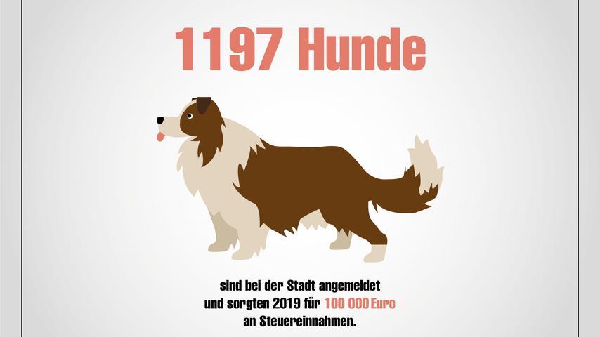 Hunde, Feuerwehr, Babys, Straftaten: Forchheim in Zahlen