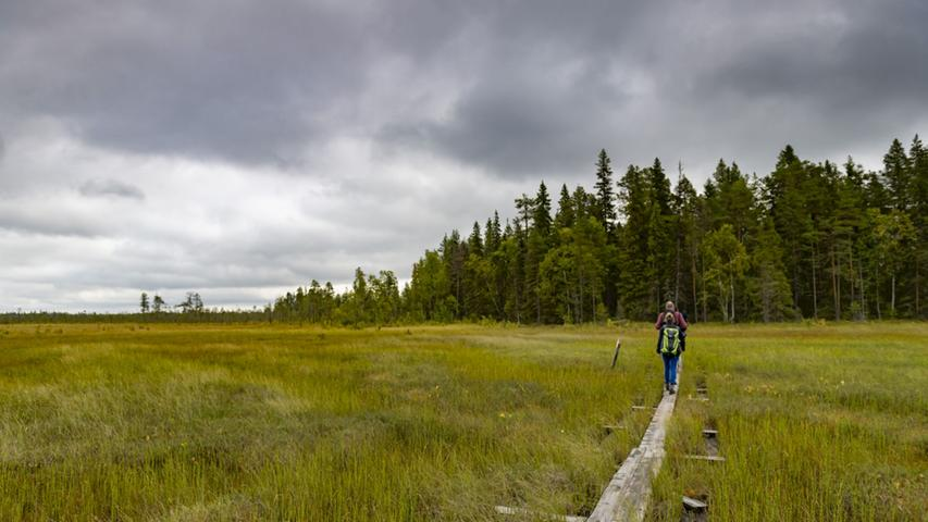 Touren durch Moorgebiete wie hier in der Nähe von Rovaniemi, Lapplands Hauptstadt, ziehen sich meist über solche Holzbohlen. Wanderschuhe bleiben deshalb trocken - nur konzentrieren muss man sich beim Gehen.