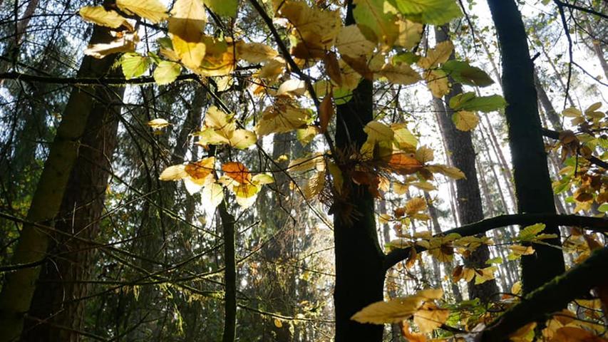 Zauber in der Sonne: So schön leuchtet Franken im Herbst