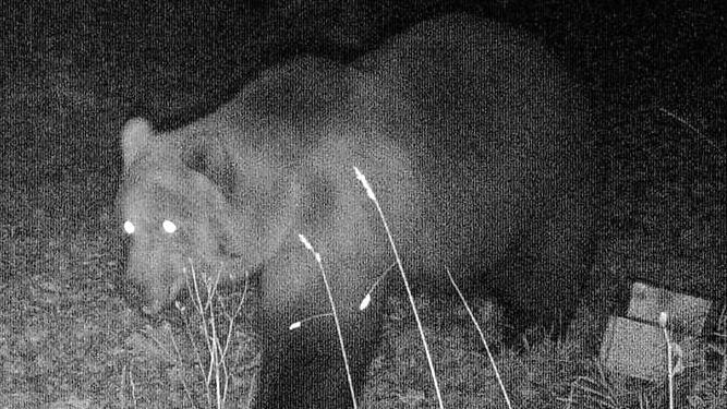 Bereits seit Juni dieses Jahres und zuletzt am 9. Oktober wurde in Tirol ein Bär nachgewiesen.