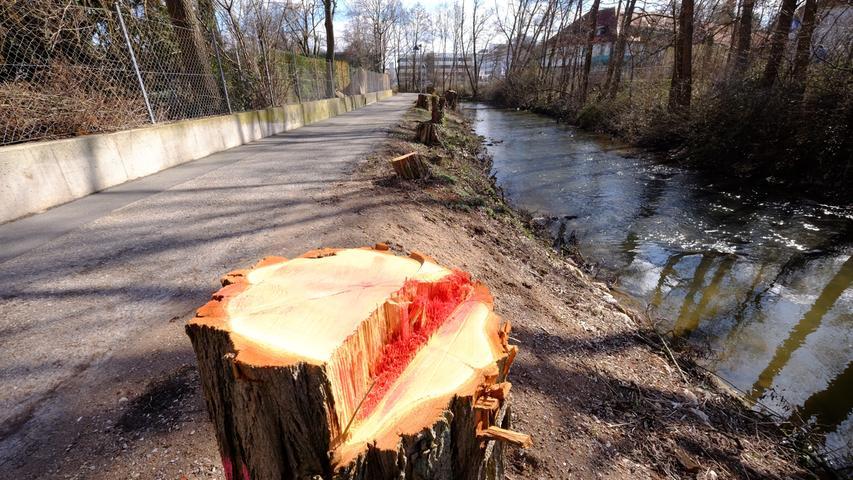 ... näher an den Fluss kommen. Das Argument: Die Natur erobert sich ihren Platz zurück, zudem hätte einige Bäume ohnehin mittelfristig gefällt werden müssen.
