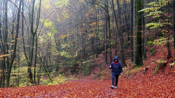 Jugend hat keine Lust auf Wandern - Nordbayern.de