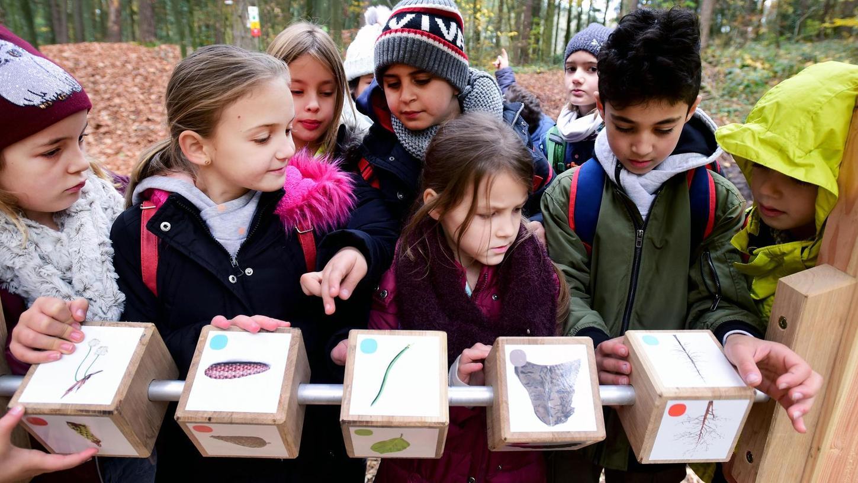 Mit einem Dreh an den Würfeln erhalten die Kinder auf spielerische Art und Weise Informationen über die Baumarten im Fürther Stadtwald. Die Mädchen und Jungen aus der Grundschule Frauenstraße vertieften sich sofort und puzzelten.