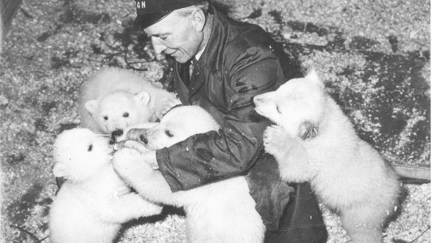 FOTO: Leserin der Nürnberger Nachrichten / gesp. 2007 MOTIV: Nachwuchs bei den Eisbären im Tiergarten Nürnberg. Vater der Eisbären: Stromer. 1950.