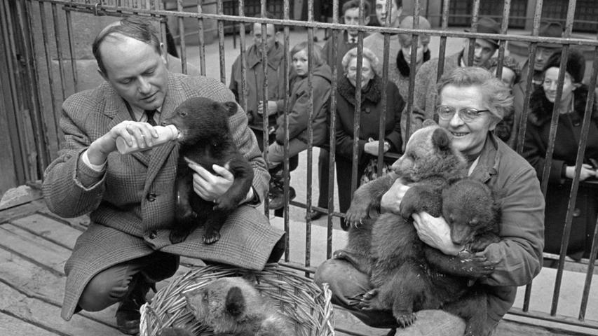 FOTO: NN / Hans Kammler, historisch; 1960er; veröff. NN 25.03.1967...MOTIV: Nürnberg: Tiergarten, Tiere, Raubtier, im Gehege, Käfig, Innenansicht Raubtierhaus, sechs Junge, Baby, Die Kleinen kuscheln sich in einem Korb und nuckeln an der Milchflasche, auf dem Arm der Pflegerin und des Mannes, Füttern, Die Eltern sind Kragenbären 'Chini' und 'Tai-Tai'. ..KONTEXT: