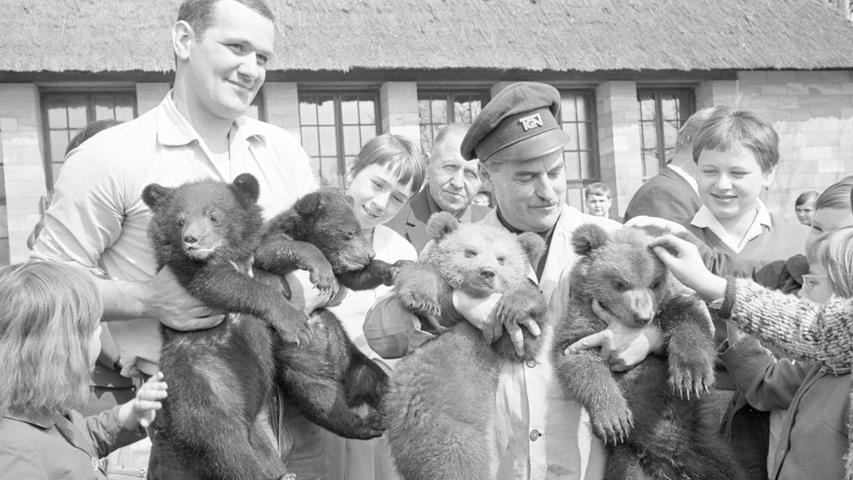 FOTO: NN / Gertrud Gerardi, historisch; schwarzweiß; 1960er; veröff. NN 08.04.1966..MOTIV: Nürnberg; Tiergarten, Zoo, Besucher streicheln Bären....KONTEXT: