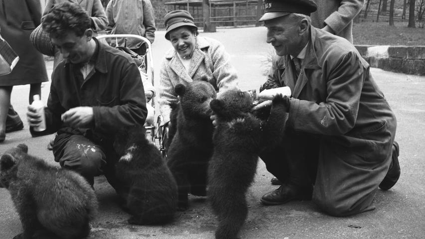 Tiergarten Nürnberg, Sechziger Jahre, 1961, Junge Bären werden präsentiert. Besucher dürfen sie streicheln. Foto: Gerardi. Ein ähnliches Motiv wurde veröffentlicht in den NN am 30./31.03. 1961..Überschrift: