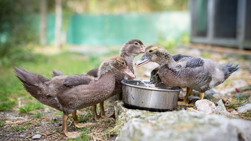 Überm. von: m.bader@tierheim-nuernberg.de Tierheim-Kalender Foto: Thomas Hahn honorafrei nur in Verbindung mit dem Kalender
