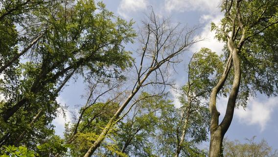 Klimawandel: 338 Fußballfelder toter Wald in der Fränkischen Schweiz