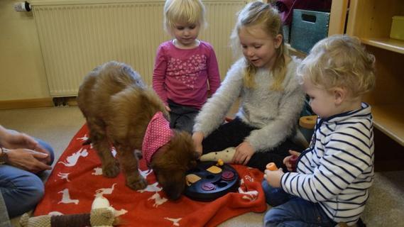 Welpe im Kindergarten: Rasch hat neuen Therapiehund