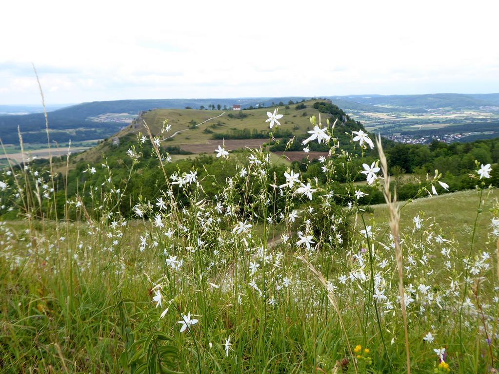 Walberlafotos  Walberla mit Blumenfeuerwerk im Vordergrund  Foto: Norbert Haselbauer Datum: 12072018