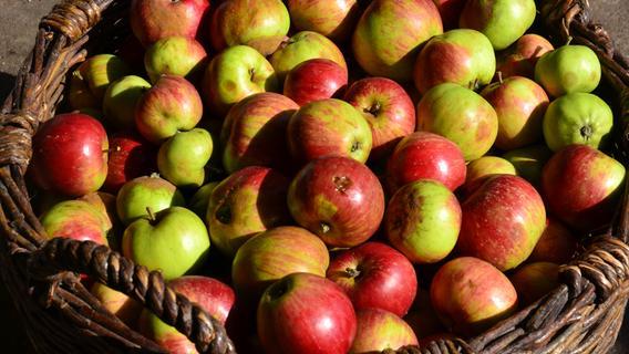 Landkreis Ansbach gibt Obstbäume zur Ernte frei - diese Markierung müssen Sie beachten