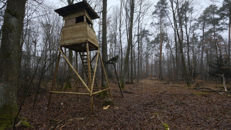 Dieser Jägerstand in einem Waldstück am Tiergarten erhitzt derzeit viele Gemüter. Die Bayerischen Staatsforsten sehen hingegen keinen Grund zur Sorge.