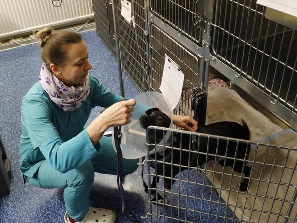 Neben der medizinischen Versorgung gibt es für die tierischen Patienten auch immer ein paar Streicheleinheiten – so viel Zeit muss sein.