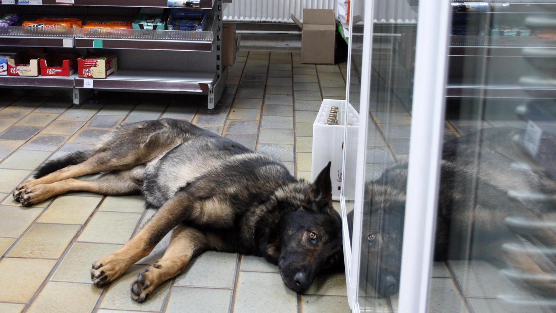 Balu – ganz entspannt in seinem Revier: Er gehört zur Familie und zur Tankstelle, abends ist er im Wachhund-Modus.